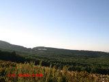 C. Grande 2004
