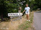 Borruga